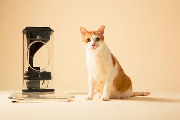 Bistro-macskaeteto-1