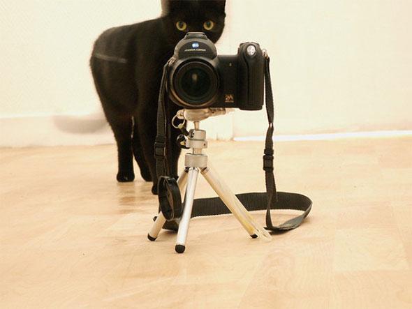 fekete-cica-foto